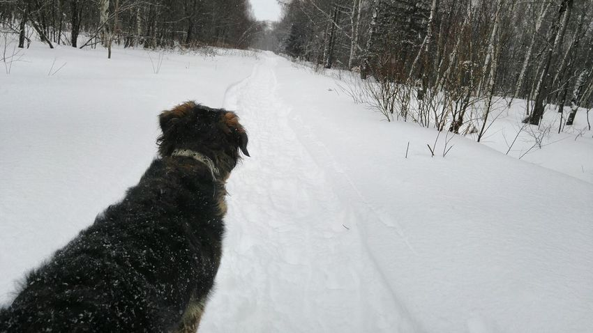 What Did You See? ^^ Snow ❄ Forest The Great Outdoors - 2016 EyeEm Awards Outdoors Pets Domestic Animals Chien Beauty In Nature Winter Trees Walking In The Woods Quebec