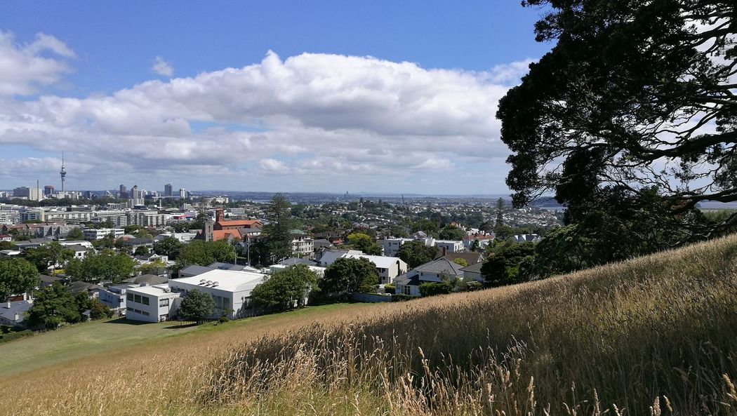 Mt Hobson Mt Hobson Auckland Pohutukawa Cityscape Building Exterior Cloud - Sky Outdoors Cityscape No People Landscape Architecture City Tree