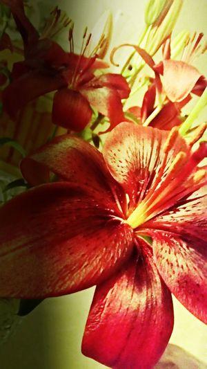 Flowertime Flowers Pretty♡