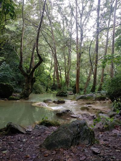 Nature Tree Water Forest Tree Trunk Reflection River Landscape Grass