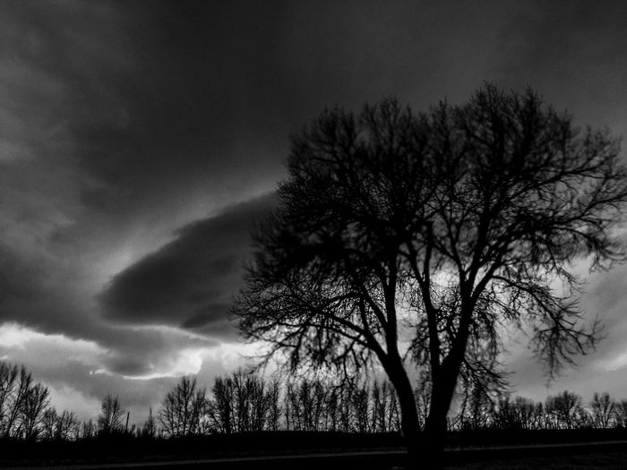One that I left out Rainy Days Nature Stormy Weather Tree Black And White Highways And Byways Driving Moving Capture The Great Outdoors - 2016 EyeEm Awards