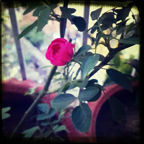 Flower Simplicity.... Shivi:)