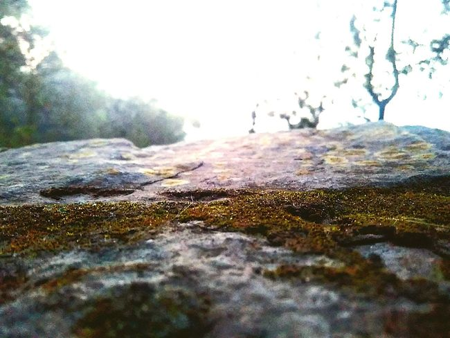 Mountain Nature Beauty In Nature Outdoors Close-up Moss Wildlife & Nature No People The Great Outdoors - 2017 EyeEm Awards Landscape Day Fog Scenics Water Sky First Eyeem Photo