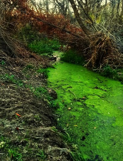 Moss Stagnant Water Green Color Nature Outdoors No People Water Day Growth Beauty In Nature Tranquility Grass