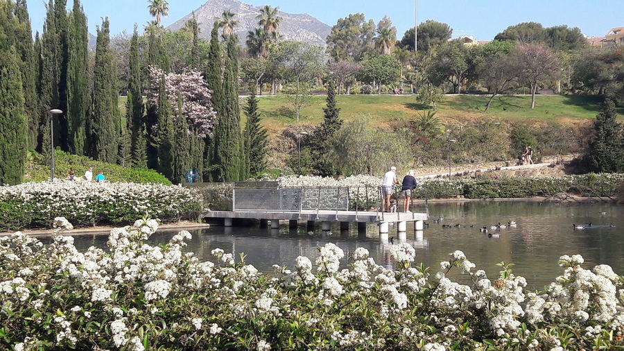 Tree Nature Water Growth Plant Outdoors Lake Day Beauty In Nature Flower Sky Benalmádena, Malaga, Spain Arroyo De La Miel Railing