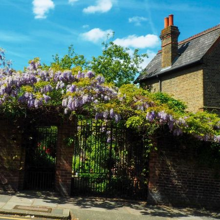 Nature's decoration Spring English Garden Purple Flowers Purple Wisteria Flower Wisteria Flower Architecture Built Structure Building Exterior Plant Tree Sky Building Cloud - Sky Growth Day Nature No People Flower Flowering Plant Sunlight City History Tower Outdoors The Past