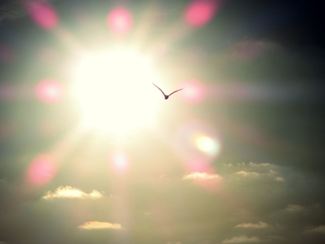 sky, sunlight, sun, lens flare, animal themes, beauty in nature, animal, vertebrate, nature, animals in the wild, one animal, no people, animal wildlife, bird, low angle view, sunbeam, day, cloud - sky, outdoors, flying, bright, brightly lit