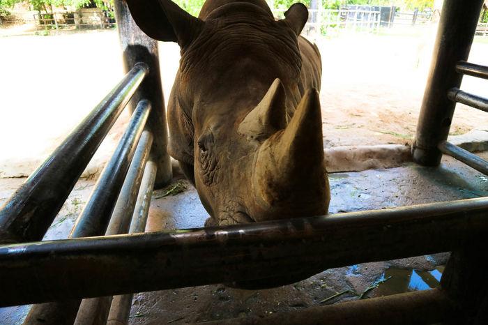 Animal Themes Day Domestic Animals Horse Livestock Mammal No People One Animal Outdoors Rhinoceros