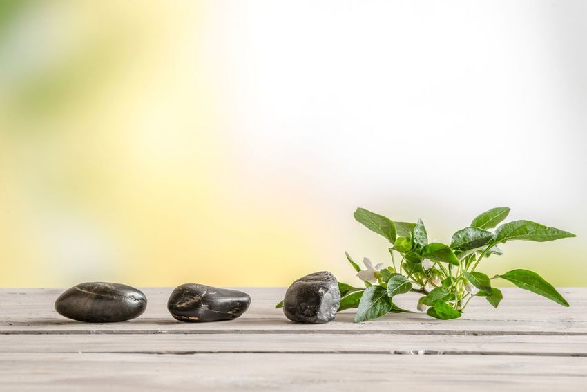 Wellness photo of three black rocks and a green plant Lifestyles Meditation Wellness Zen Copy Space Leaf Plant Part Food And Drink No People Still Life Food Nature Green Color Freshness Studio Shot Wellbeing White Background Healthy Eating Wood - Material Indoors  Close-up Table Fruit Plant