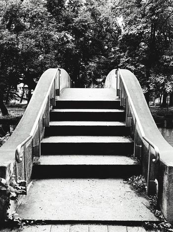 Black And White Friday Steps Steps And Staircases Staircase Tree Day Outdoors No People Architecture Nature Japan