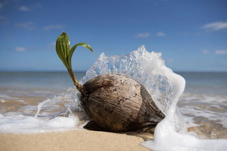 Growth Coconut Growth Motion Ocean Wave Paradise Hawaii