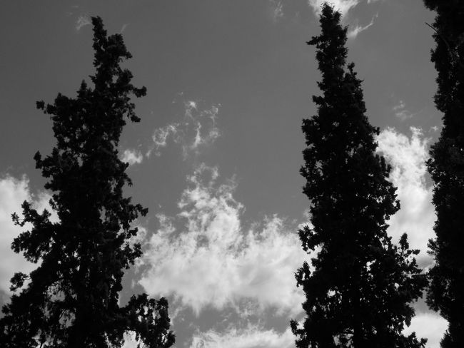 Nubes Beauty In Nature Black Blackandwhite Low Angle View Nature Scenics Sky árbol