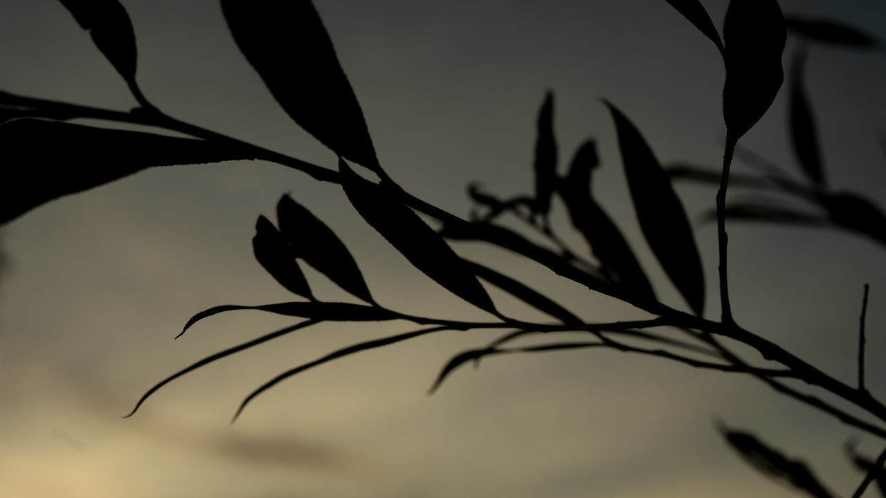 plant, silhouette, beauty in nature, nature, sky, growth, no people, close-up, tranquility, focus on foreground, sunset, plant part, selective focus, leaf, branch, dusk, outdoors, tree, day, vulnerability