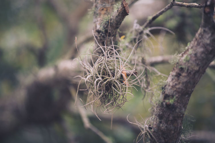 Close-up of plant on tree branch