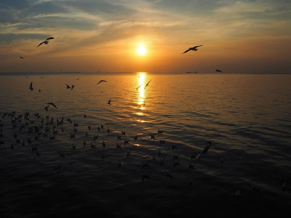 💛🕊 Capture The Moment 🕊💛 Colour Of Life Silhouette Animals Beauty In Nature Bird Dramatic Sky Exceptional Photographs Flying Idyllic Landscapes Nature Outdoors Color Palette Scenics Sea Seagull Seagulls And Sea Sunbeam Bangpu Sunset Tadaa Community Tranquility Travel Wildlife