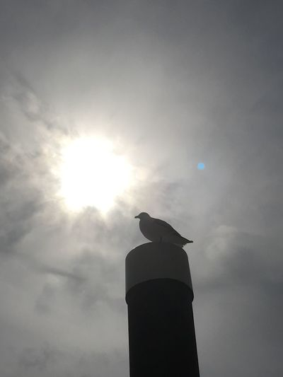 Animal Themes Bird Animals In The Wild Low Angle View One Animal Perching Animal Wildlife Wildlife No People Sky Cloud - Sky Crow Day Silhouette Seagull Raven - Bird Outdoors Nature Mourning Dove