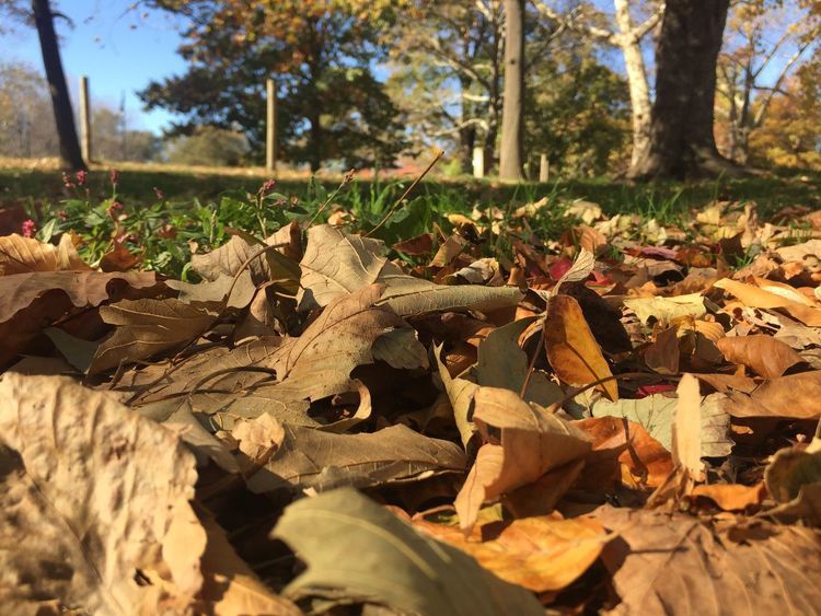 Fall! Fall Leaves New York City Brooklyn Prospect Park