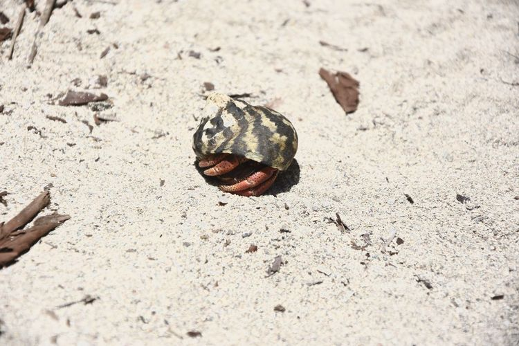 Animal Shell Close-up Crab Nature Outdoors Shell