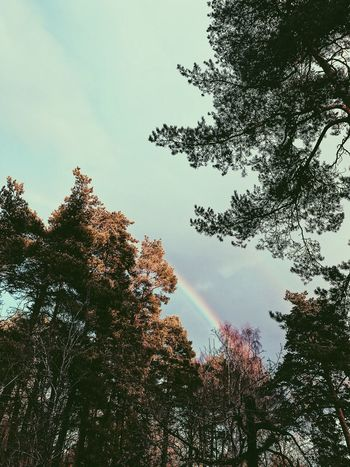 Rainbow Tree Low Angle View Nature Growth Beauty In Nature Sky No People Tranquility Outdoors Branch Forest Scenery