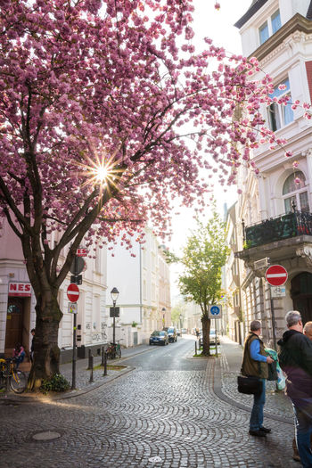 A beautiful morning at the Cherry Blossom Street in Bonn. Bonn Cherry Blossoms City City Day Deutschland Flowers Germany Morning Nature Outdoors Pink Sky Spring Street Tree
