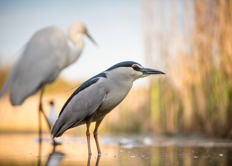 Close-Up Of Heron In Lake