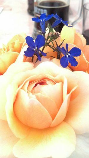 Flower Ros 🌹