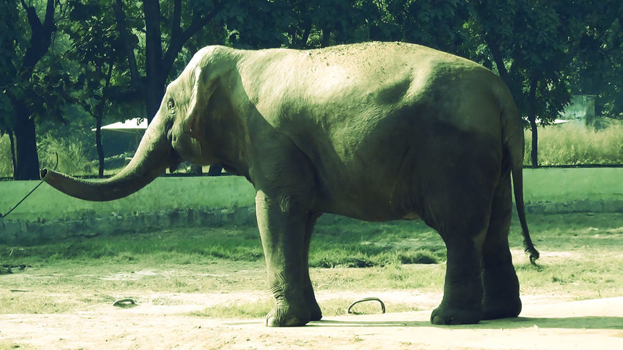 Picture of an ELEPHANT in DANCING MOOD !!! RARE PIC..... Animal Photography Animal_collection Animals Animals In The Wild Dancing Elephant Domestic Animals Elephant Elephant Corn Elephant Nature Park Eye EyeEm Best Shots EyeEm Nature Lover Field Full Length Grazing Herbivorous Mammal Nature One Animal Photgraphy Side View Sunlight Trunk Two Animals Working Animal