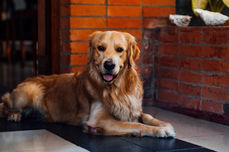 Portrait of dog sitting on brick wall