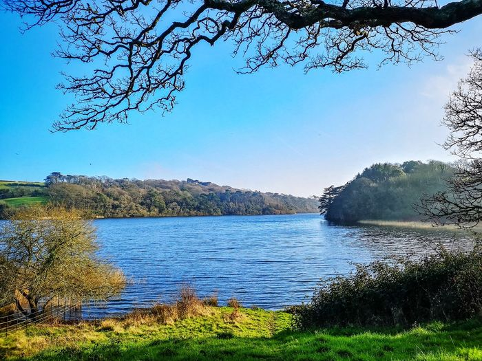 Love our county Lake Frame It! EyeEm Nature Lover EyeEm Britain Cornwall Penrose Estate Water Tree Lake Sky Grass Landscape Rippled Calm In Bloom Plant Life Tranquil Scene Lakeside Horizon Over Water