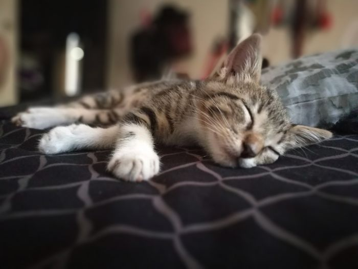 slepping EyeEm Selects Pets Feline Domestic Cat Relaxation Lying Down Sleeping Close-up
