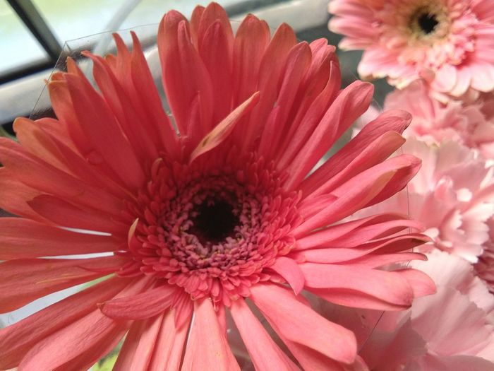 Flower Flower Head Nature Freshness Beauty In Nature Pink Color Close-up Plant Day