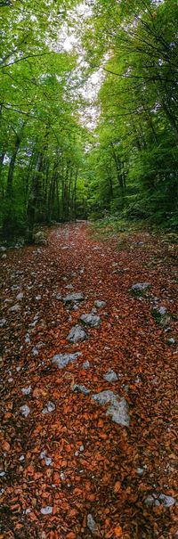 Deep woods hiking Travel Italy Pordenone Piancavallo Mobile Photography Art Fineart Panoramic Views Deep Woods Hiking Dead Leaves