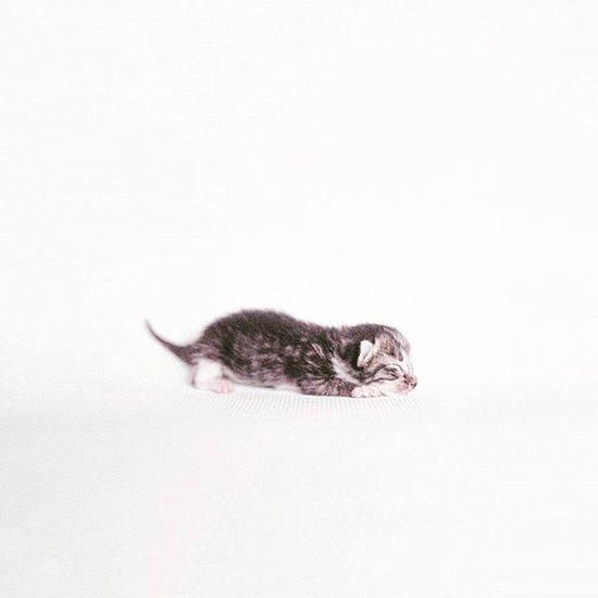 孻仔. Fujifilm PRO 400H. 120. Cat Baby Catbaby Kitten Film Fujifilmpro400h Fujifilm Filmphotographer Filmphotography 120Film 120 Meaninglessart Canton 貓 無謂藝術 廣州 菲林 😚