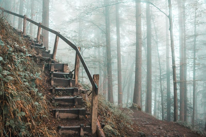 View of stairs in forest