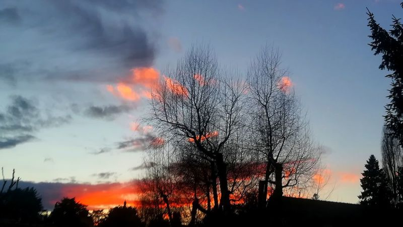 Evening.. Good Evening Landscape Clouds And Sky Silhouettes Sunset And Clouds  Sunset Sunset_collection Sunset Silhouettes Trees Winter Trees And Sky Silhouette Day Tree Bare Tree Orange Color Beauty In Nature Tranquility Tranquil Scene Scenics Branch Sky No People Outdoors Burning Nature