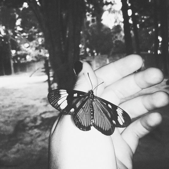 Insect One Animal Human Body Part Animal Wildlife Animal Themes One Person Animals In The Wild Butterfly - Insect Close-up Human Hand People Outdoors Adult Day Tree Adults Only Nature Perching One Woman Only Brasiliangallery Butterfly First Eyeem Photo Textured