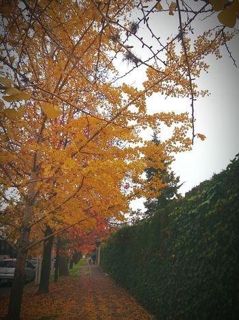 Colours Of Autumn Hurlingham Buenos Aires
