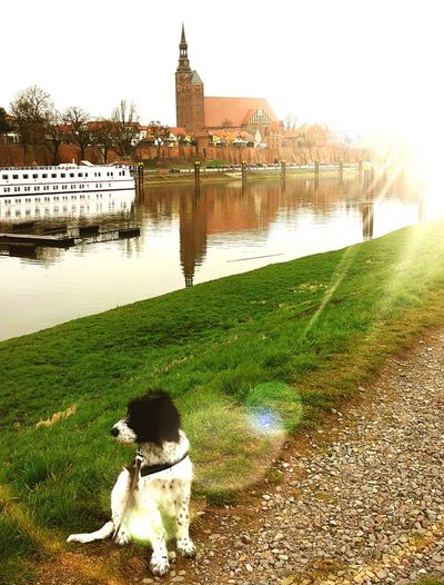 Tangermünde Water Outdoors Dog Architecture No People River Nature Elbe Elbe River Hundefotografie Domestic Animals Hovawart Mix Border Collie Mix Irish Wolfhound Mix
