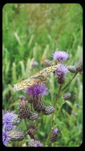 EyeEm Best Shots - Nature EyeEm Nature Lover Butterfly Having A Good Time
