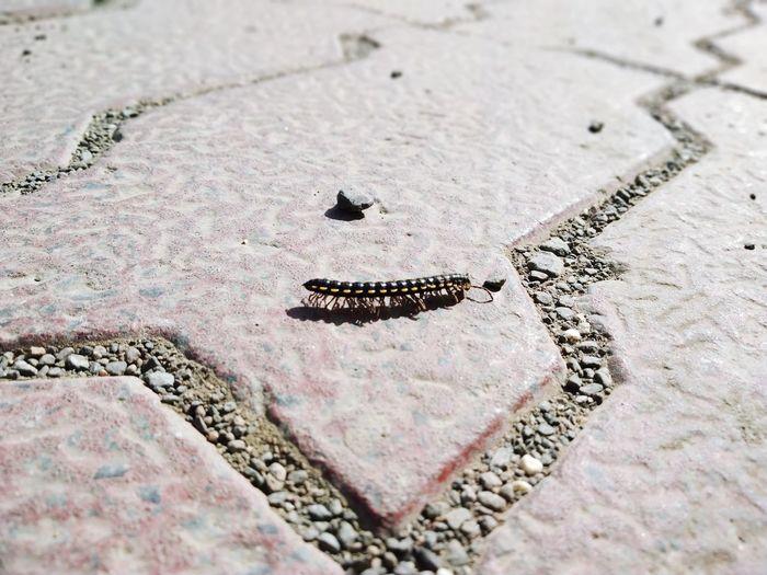 Keep marching forward despite hardhsips of life. India Pune Earthworm Earthworms Earthworm Colony Close-up First Eyeem Photo EyeEmNewHere Capture Tomorrow