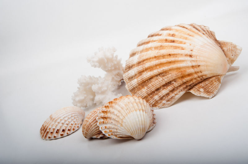 Conceptual Art EyeEmNewHere Italianstyle Life Nature Background Beach Beauty Close-up Conceptart Conceptual Photography  Decoration Italian Marine Nobody Seashell Seashells Summer White