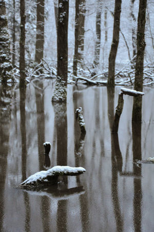 Patterns In Nature Peace Tree Water Reflections Winter Beauty In Nature Beauty In Nature Cold Temperature Frozen Meditative Spot Outdoors Silence Snow Snow Fall Trunks Winter