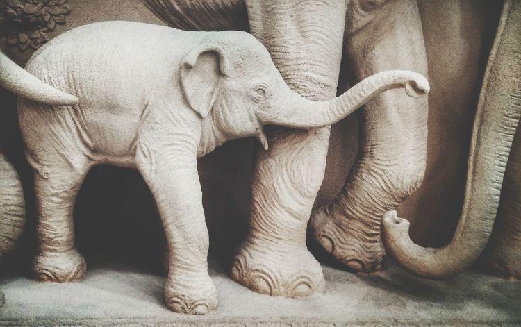 Baby elephant Baby Elephant Baby Elephants Playjng Elephant ♥ EyeEm Selects Elephant Indoors  Mammal No People Animal Themes Day Close-up Animal Trunk African Elephant