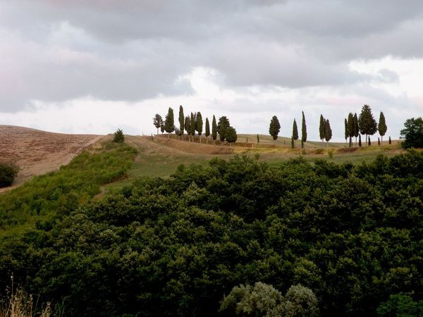 Ciprés Cloud - Sky Cloudy Countryside End Of Summer Endofvacation Green Green Color Harvest Italy Italy❤️ Its My Life Landscape Landscape_Collection Nature Nature_collection Tipical Toscana Toscany Tranquil Scene Tranquility Trees
