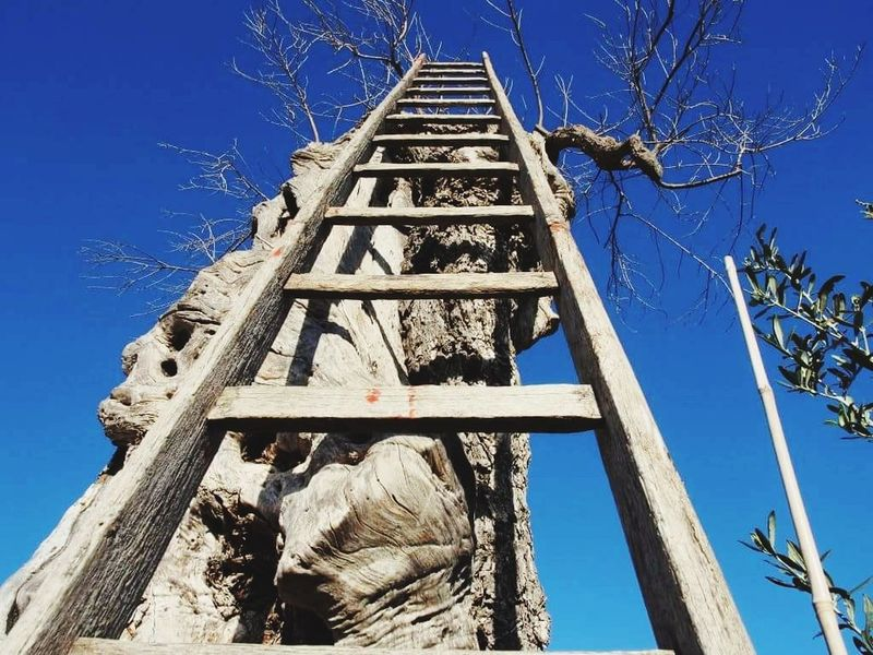 up Blue Sky Tree Clear Sky Outdoors No People Low Angle View Day Ladder Ladder In Sky Ladder To Nowhere Ladder To Heaven Ladder On A Tree Ladder In Tree