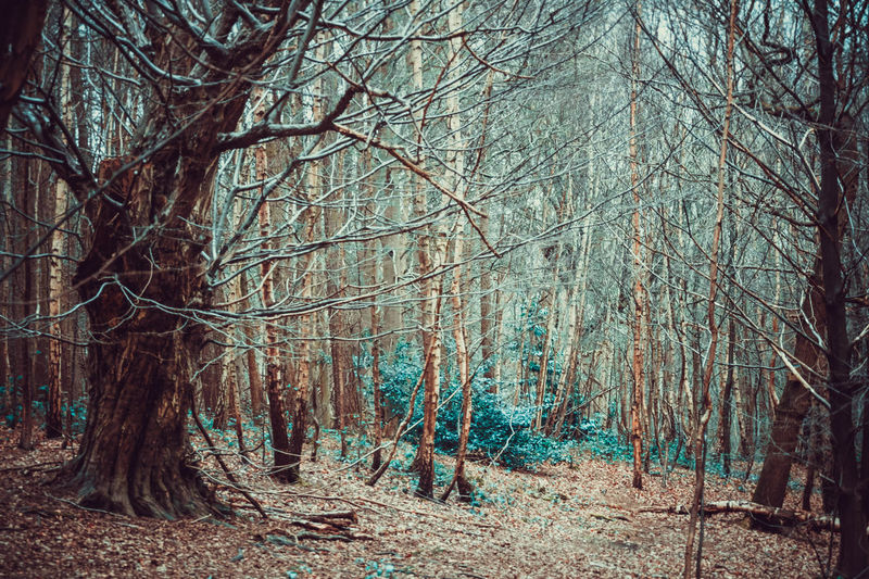 Beauty In Nature Branch Day Forest Growth Landscape Lots Of Leaves Nature No People Outdoors Tranquil Scene Tranquility Tree Tree Trunk Trees Vibrant Color Walk In The Forest Walk In The Woods Wilderness WoodLand Woods