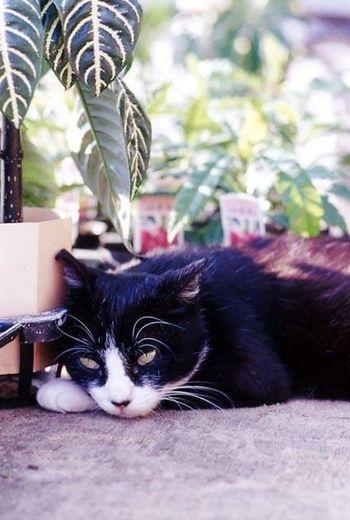 Kimitsu Japan 猫 Cat EyeEm OpenEdit Snapshot Nikon Flower Filmcamera
