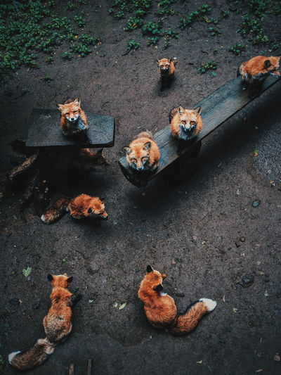 High angle view of foxes on land in forest