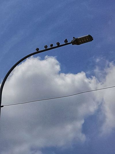 Low angle view of birds perching on street light
