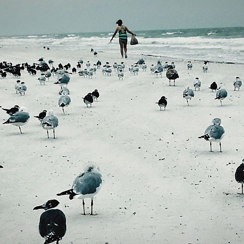 Run wild Horizon Over Water Beach Gulf Of Mexico Shoreline Gulf Coast I LOVE PHOTOGRAPHY Birds Sand Just Hanging Out
